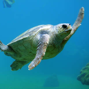 Turtle Watching Tour in Playa Samara, Costa Rica with Leo Tours, Costa Rica Vacation Private Tours